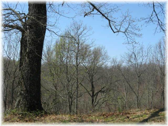 14. Land for Sale at 8519 Mccrory Lane Nashville, Tennessee 37221 United States