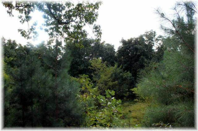 17. Land for Sale at 8519 Mccrory Lane Nashville, Tennessee 37221 United States