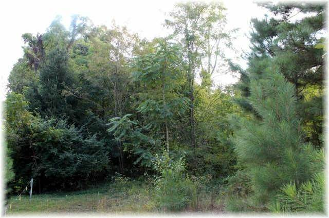 4. Land for Sale at 8519 Mccrory Lane Nashville, Tennessee 37221 United States