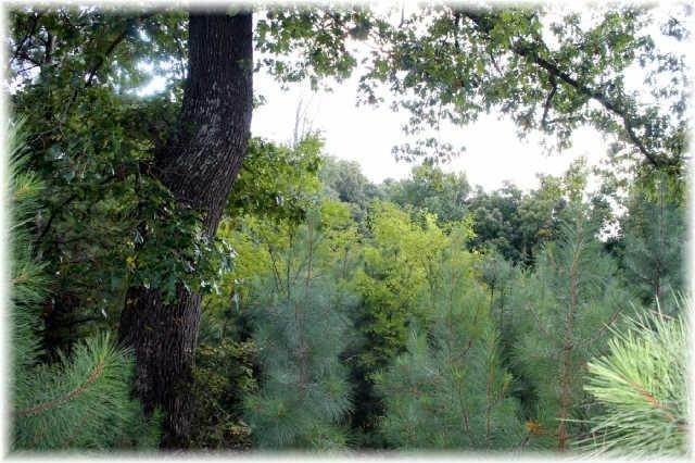 Land for Sale at 8519 Mccrory Lane Nashville, Tennessee 37221 United States