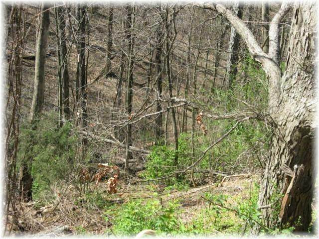 15. Land for Sale at 8519 Mccrory Lane Nashville, Tennessee 37221 United States
