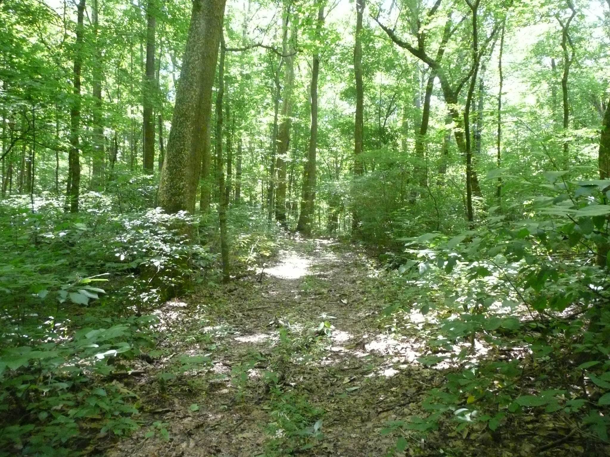 Land for Sale at Happy Hollow Road Goodlettsville, Tennessee 37072 United States