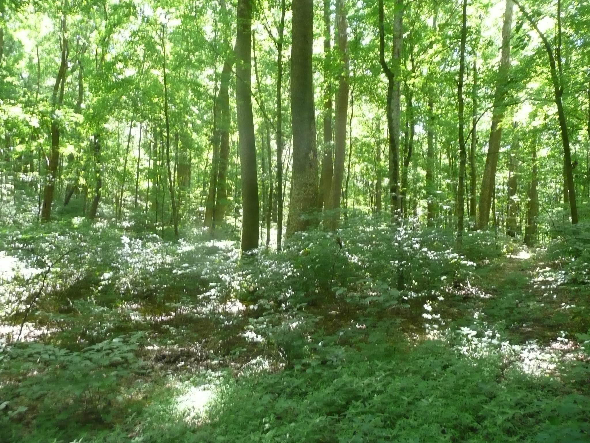 3. Land for Sale at Happy Hollow Road Goodlettsville, Tennessee 37072 United States