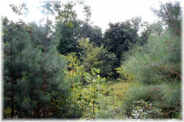 16. Land for Sale at 8519 Mccrory Lane Nashville, Tennessee 37221 United States