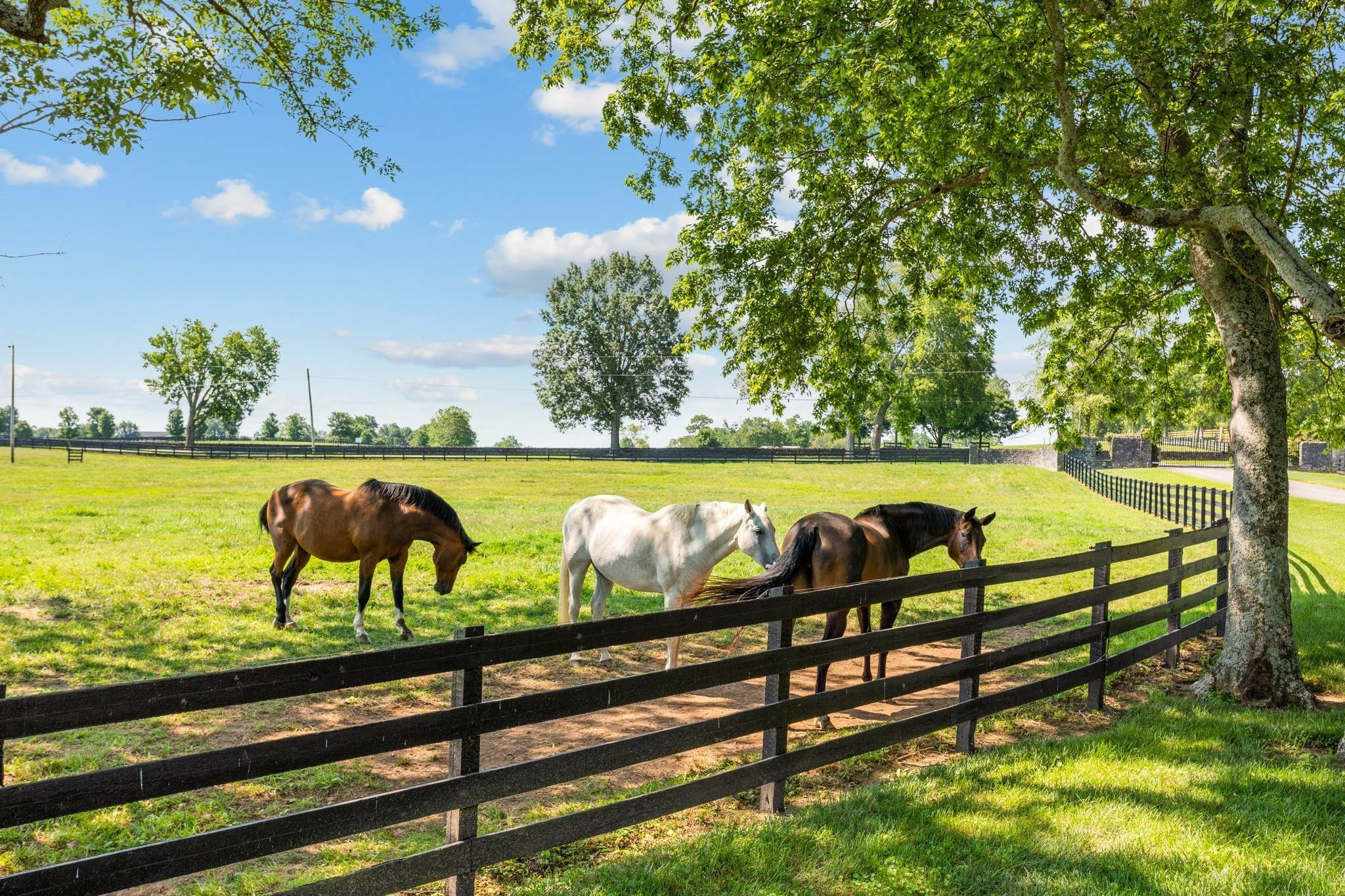 Farm for Sale at 1500 Moran Road Franklin, Tennessee 37069 United States